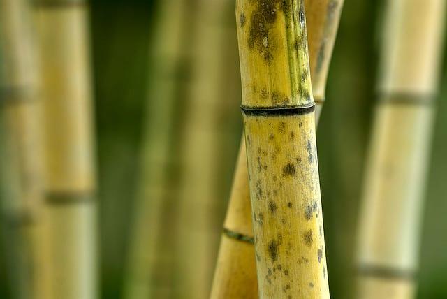 bamboo-laminate-flooring-6-part-series-interior-surface